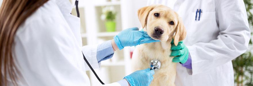 Vétérinaire animal